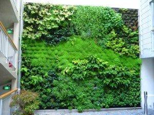 Mur-vegetal-exterieur-Hotel-Jules-et-Jim